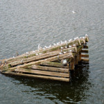 Юдитин мост