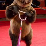 Дрессированные медведи Виктора и Ольги Кудрявцевых
